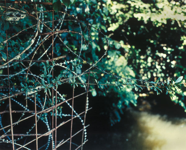 wire_ivy_river
